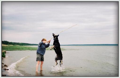 German Shepherd Oksana jumping from water