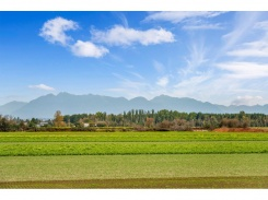 5 6233 LONDON ROAD - Steveston - Steveston South