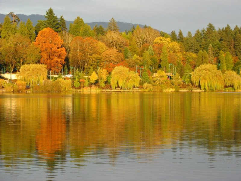 Autumn foliage on the north side of Lost Lagoon (Stanley Park)