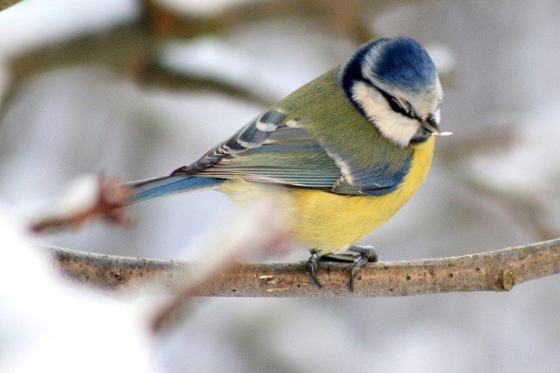 Bird In The Winter Vancouver Bc Photos