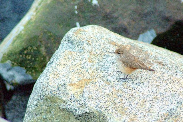 Nature in Iona Beach Park