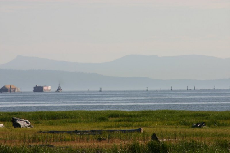 View from the Richmond Dyke Trail