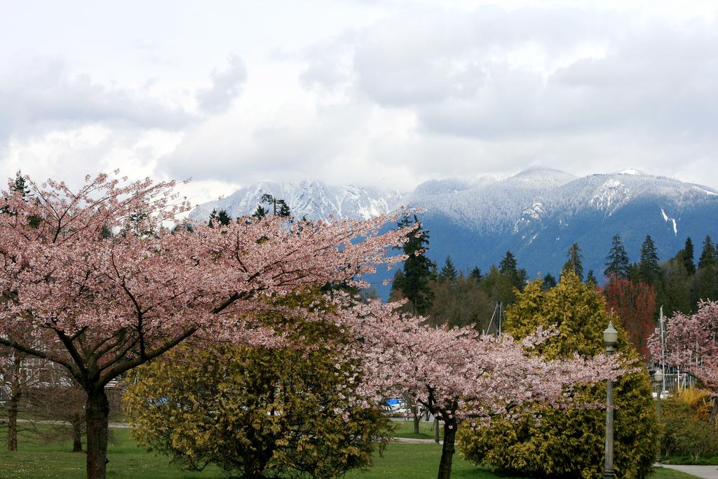 spring in stanley park