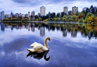 vancouver stanley park morning lagoon