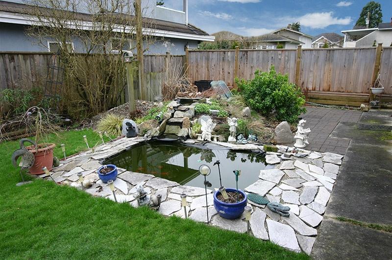3320 barmond   yard pond